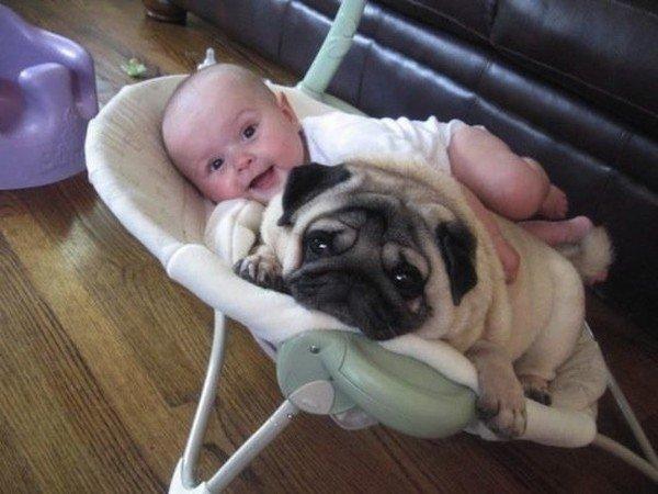 Perro: el mejor amigo del hombre