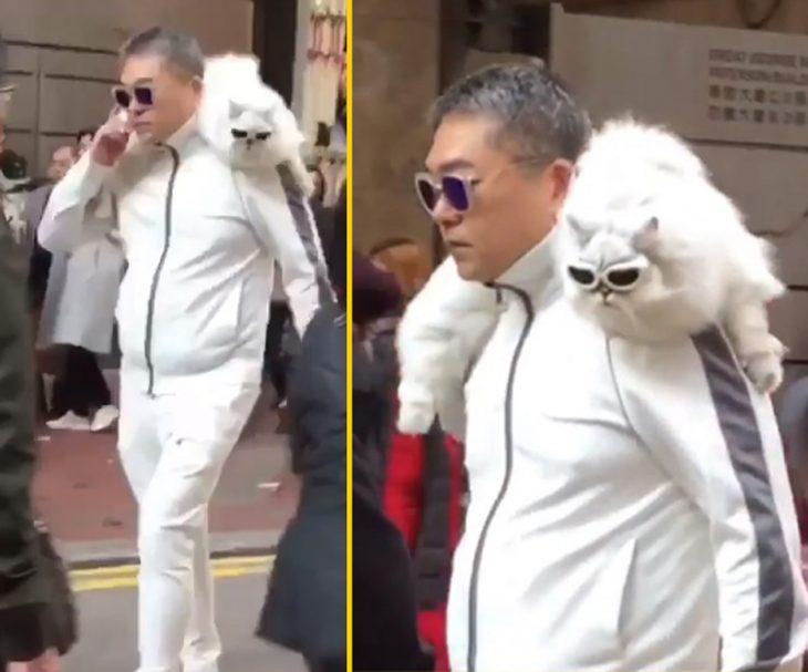 cosas bizarras en China gato