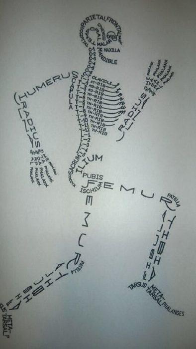 diseñador gráfico nivel dios esqueleto