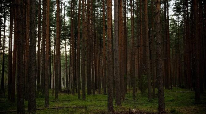bosque bruja blair