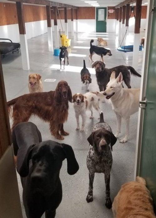 gente con suerte perros