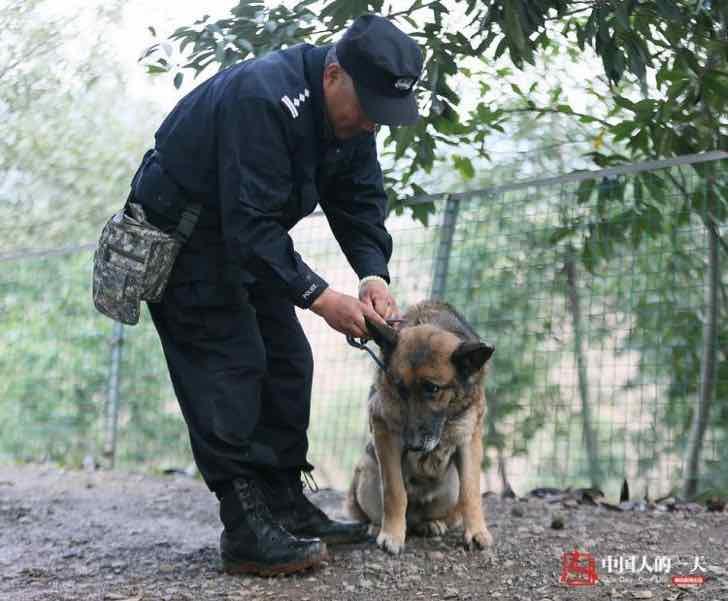 bai yan perro policía
