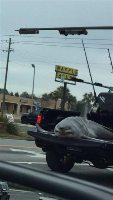 galería de fotos WTF tiburón