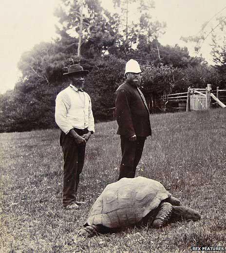 Tortuga Jonathan en 1882