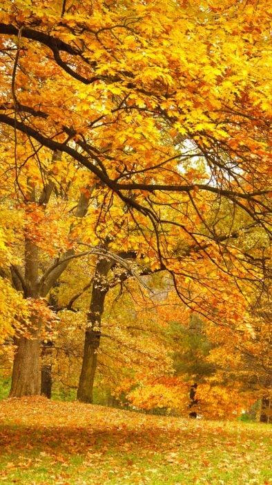Fondos de pantalla naturaleza otoño