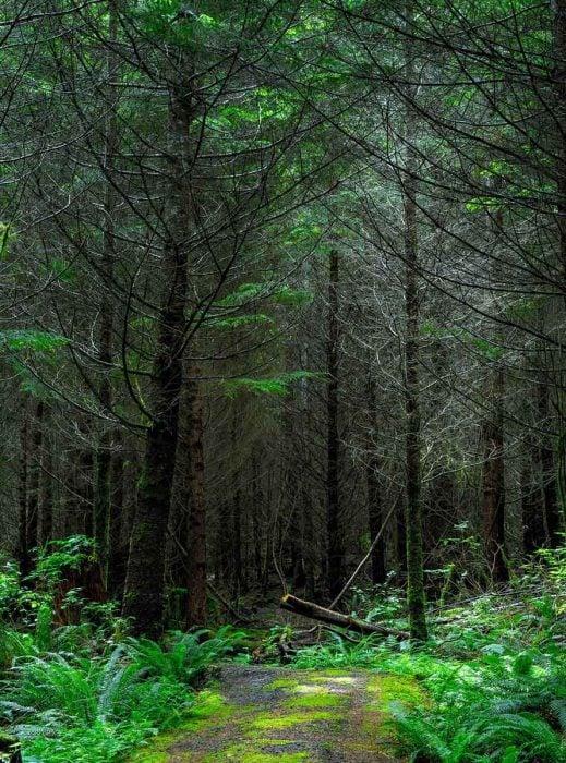 Fondos de pantalla naturaleza bosque