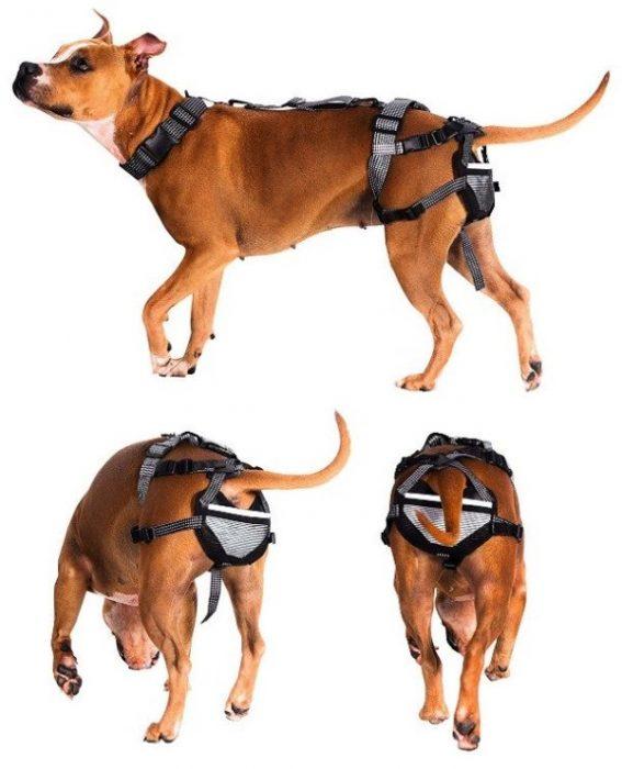 inventos con patente cinturón castidad perro