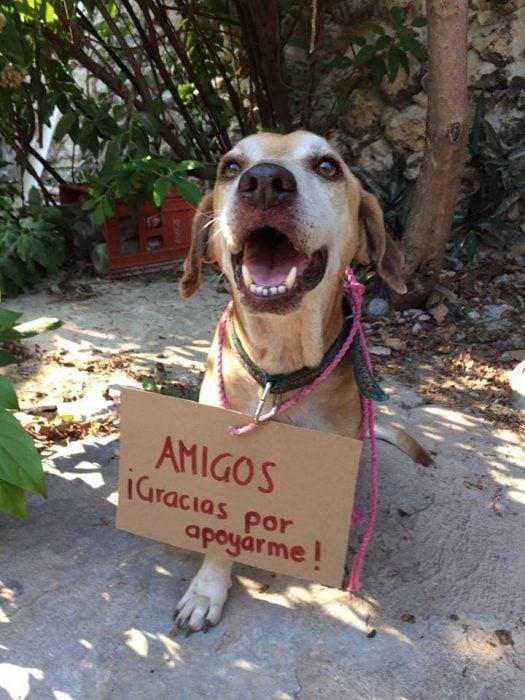 Deko perrito cáncer