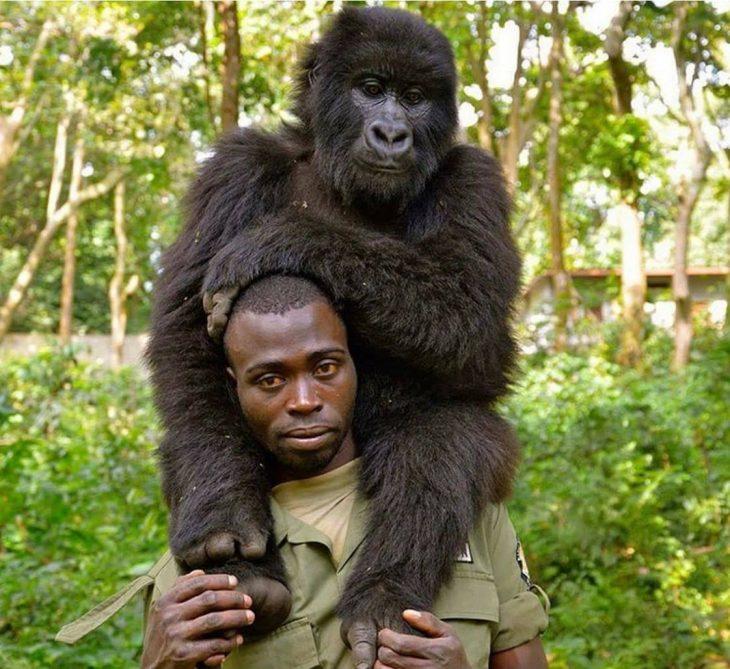 Humano y gorila