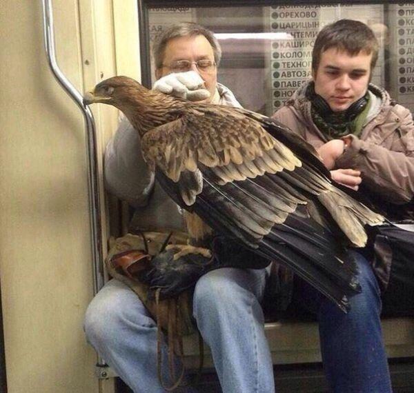 cosas raras en rusia mascota