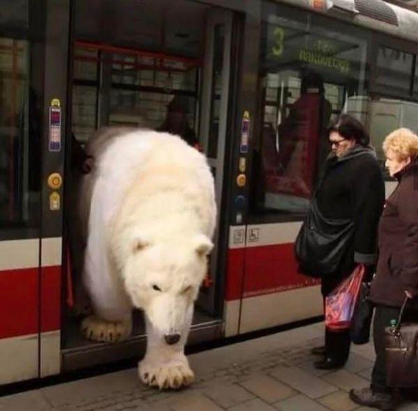 cosas raras en rusia oso