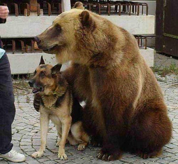 cosas raras en rusia osos
