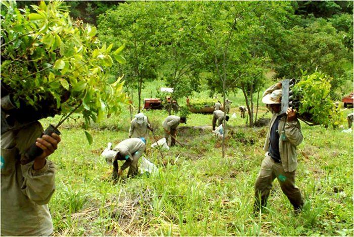 reforestación en brasil por fotógrafo