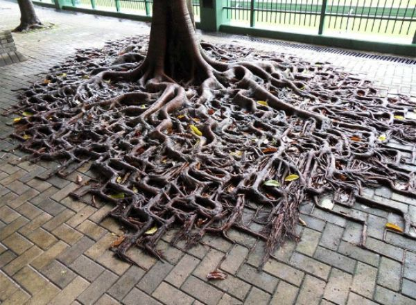 Fotos e imágenes perfectas árbol