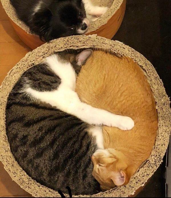 Fotos e imágenes perfectas gatos