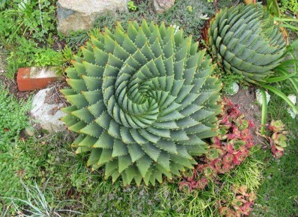 Fotos e imágenes perfectas cactus