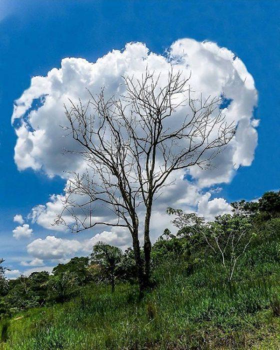 Fotos e imágenes perfectas nube algodón
