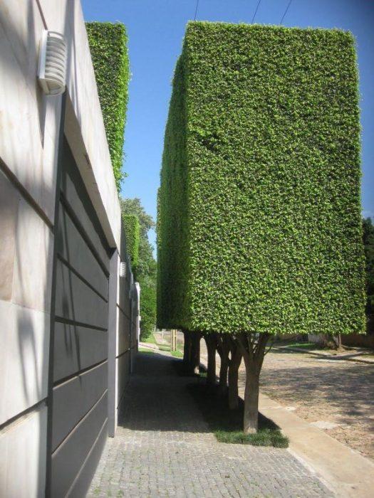 Fotos e imágenes perfectas jardinería