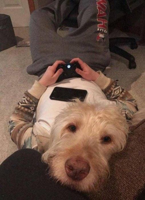 imágenes confusas divertidas perro celular