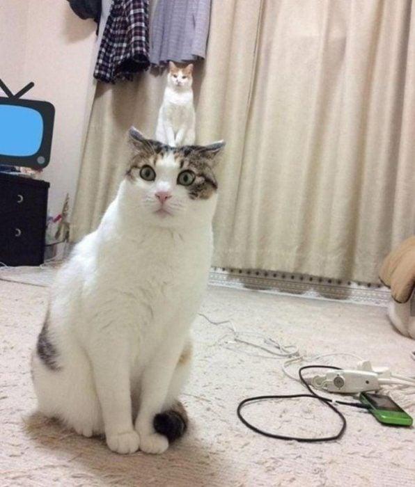 imágenes confusas divertidas gato mini