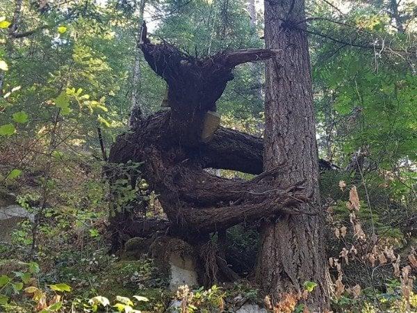 imágenes confusas divertidas tronco