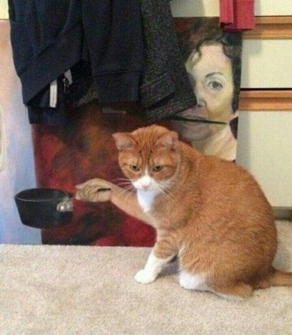 imágenes confusas divertidas gato