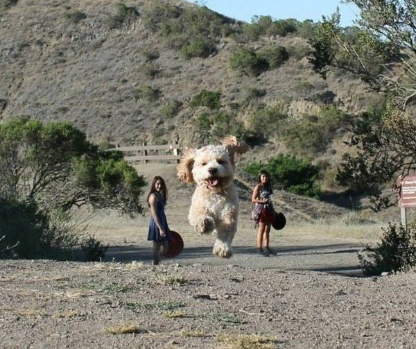 imágenes confusas divertidas perro gigante