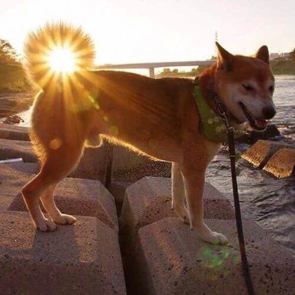 Imágenes bonitas y perfectas cola de perro