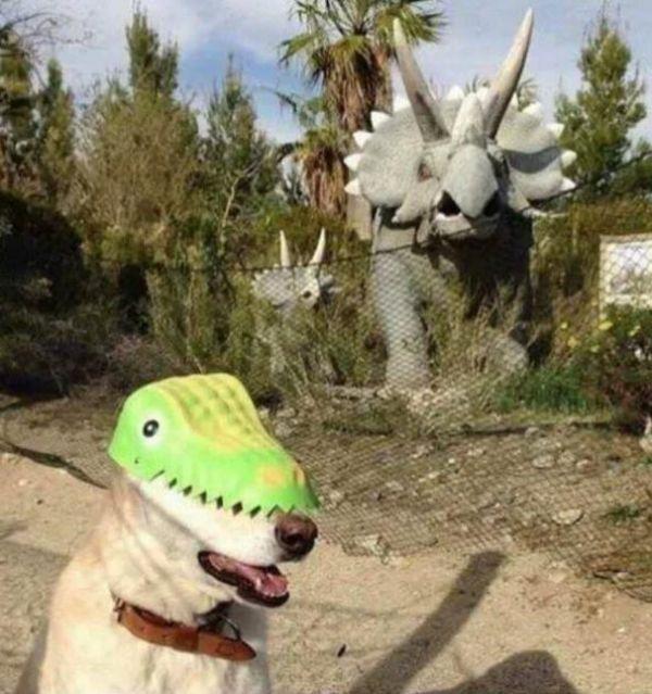Imágenes raras sin explicación dinosaurio