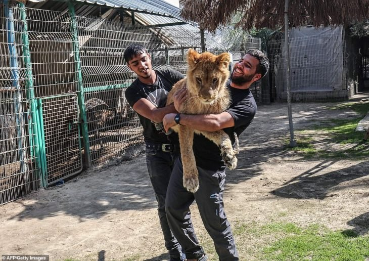 leona amputada garras