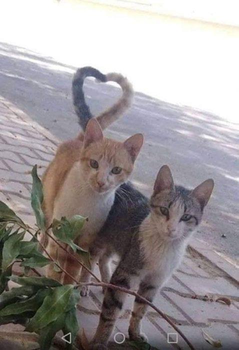 Imágenes de extrañas coincidencias colas de gato