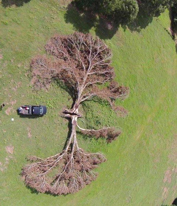 Imágenes de extrañas coincidencias árbol y rayo