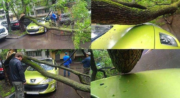 Imágenes de extrañas coincidencias árbol