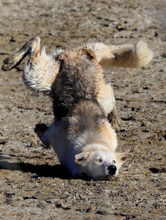 imágenes sin sentido perro fail