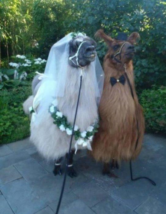 imágenes sin sentido boda llamas