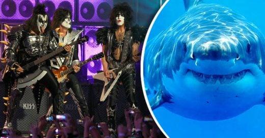 Kiss tocarà concierto para tiburones