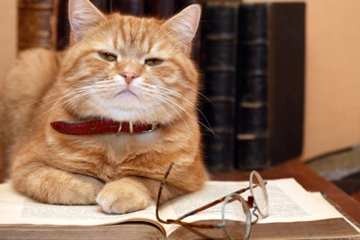 gato que lee
