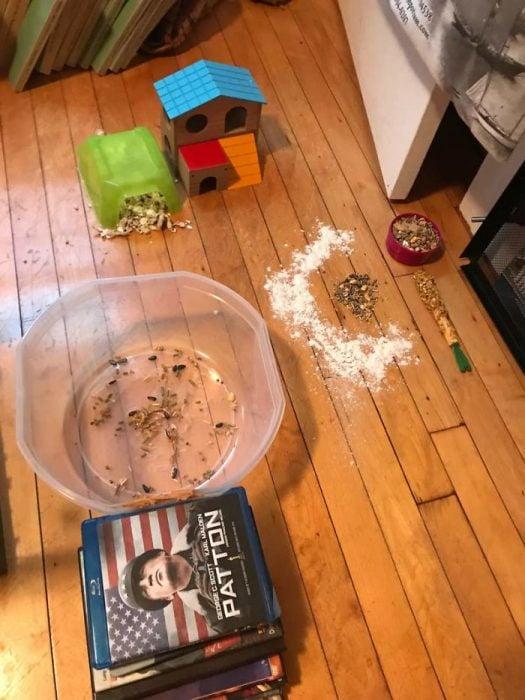 hamster perdido