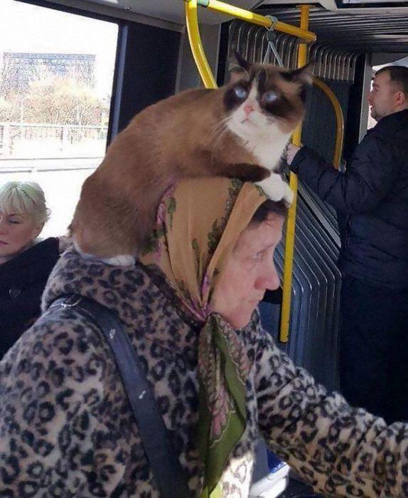 raresas transporte