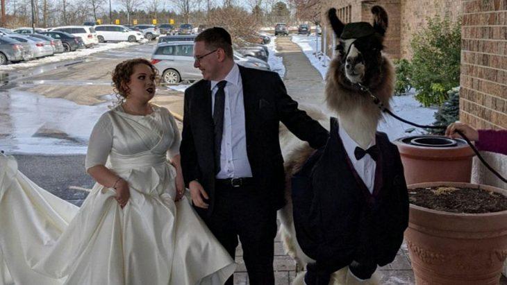 llama en boda de hermana