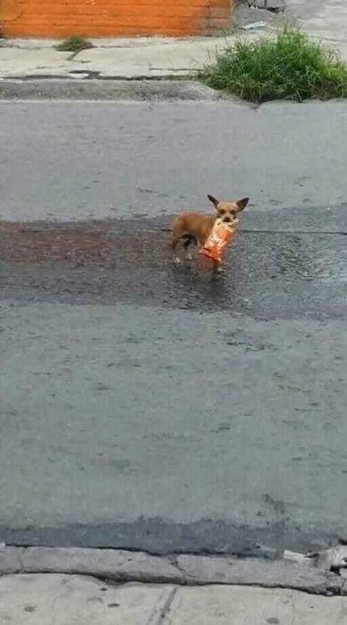 perrito va a la tienda