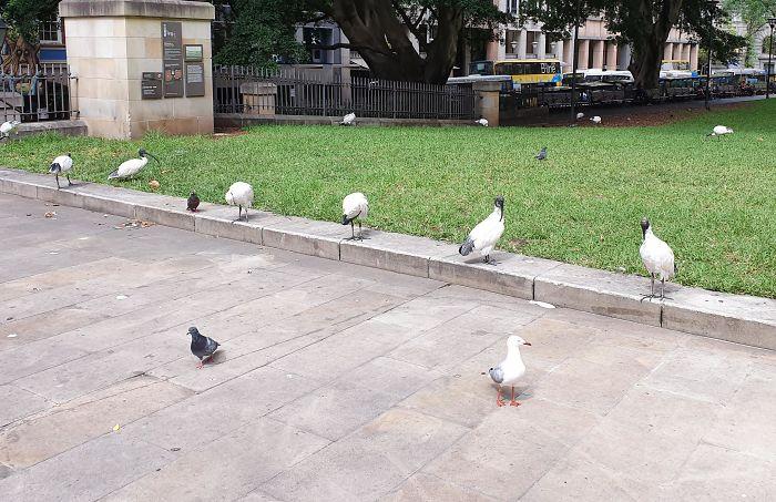 distancia saludable de los animales