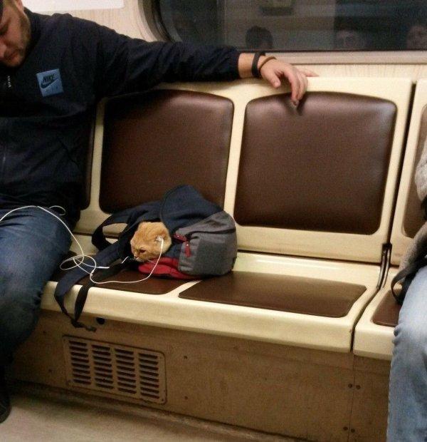 personalidades transporte público