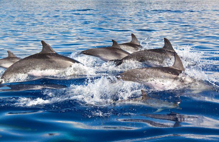 delfines corea del norte