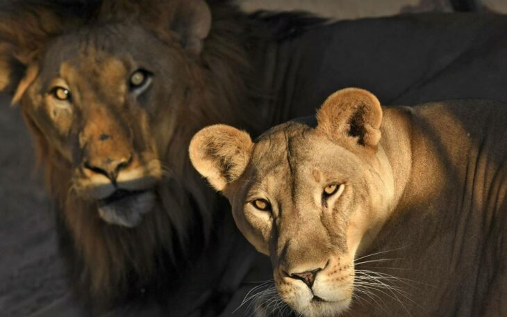 leones barcelona