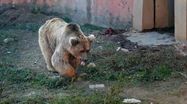 osos camboya