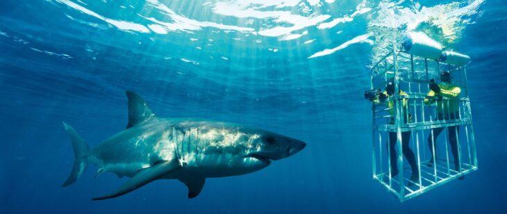 Callejón de los tiburones