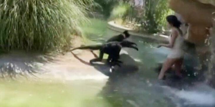 Woman climbs into monkey exhibit at El Paso Zoo
