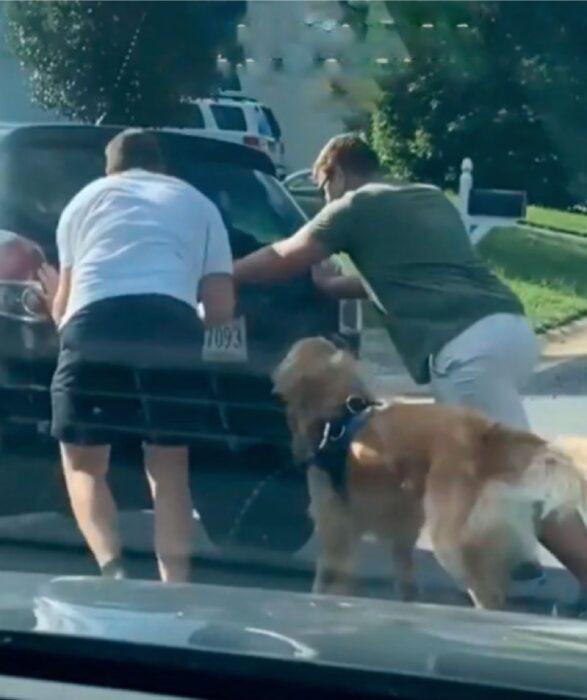 perro empuja auto
