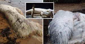 Extraña criatura aparece en las costas de Filipinas… al fin los expertos descubren lo que es